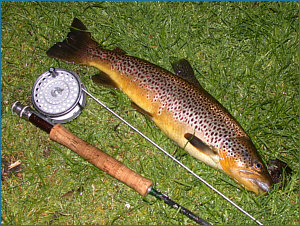 Brown Trout Fishing in Scotland