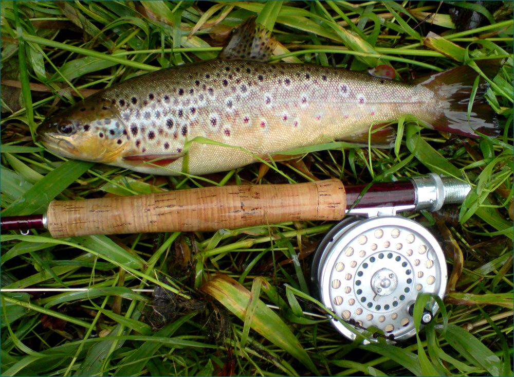 Trout fishing scotland wild brown trout fly fishing for Fishing in scotland