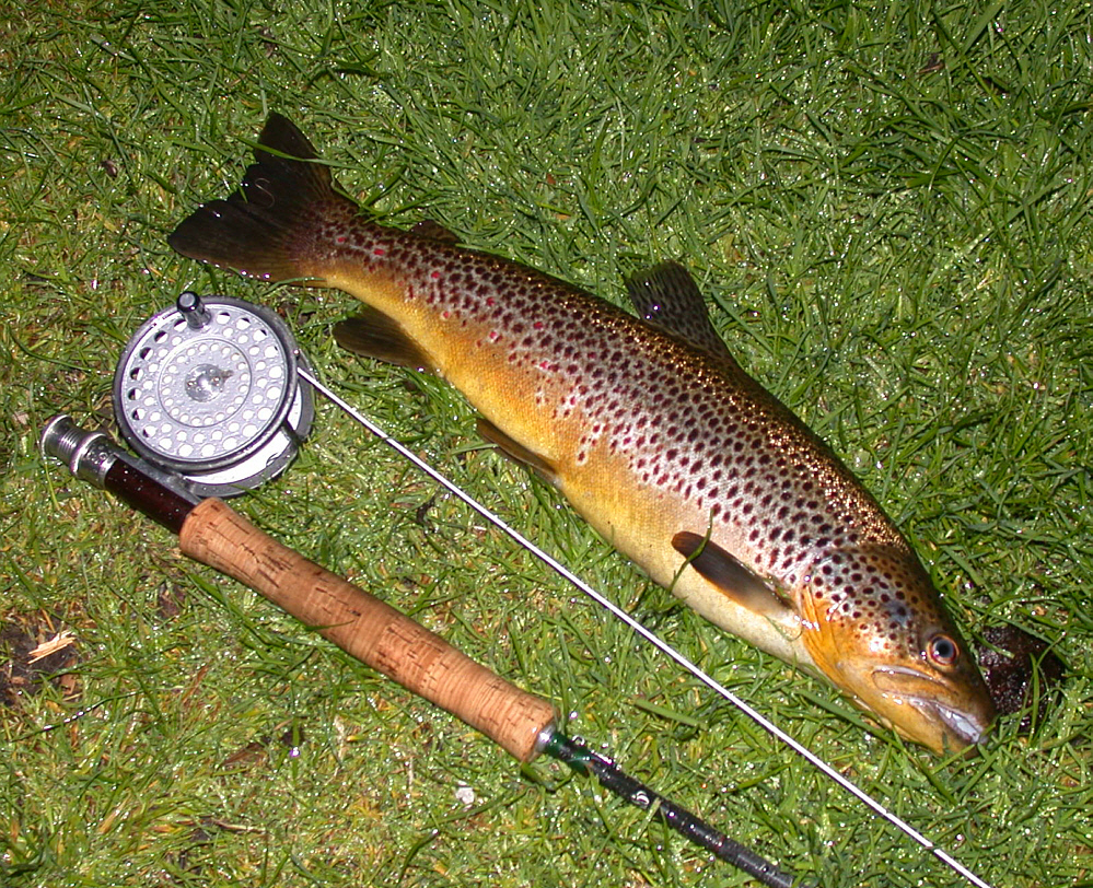 Trout fishing scotland wild brown trout fly fishing for How to fish trout